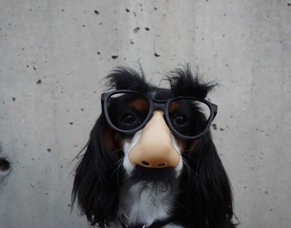 A picture of a dog wearing a mask.